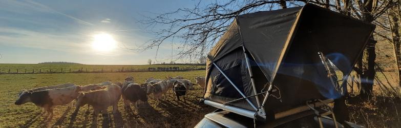 tente de toit jimba dans campagne belge avec vaches